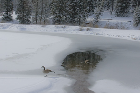 two geese on upper lake