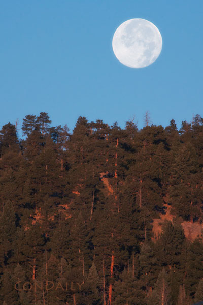 Morning Moon Setting over Forest, © Con Daily