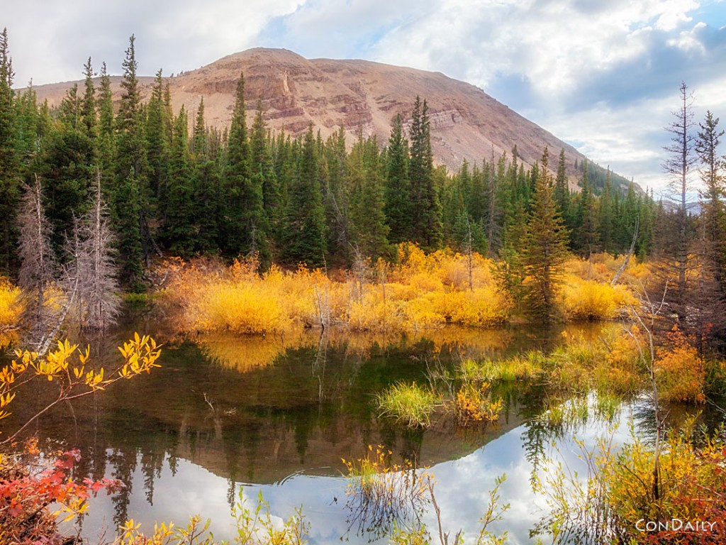 Autumn Beaver Pond - Photograph by Con Daily