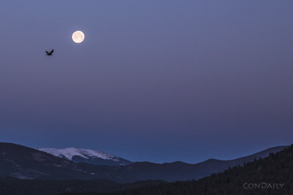 Dawn flight with full moon  April 5, 2015 ©ConDaily